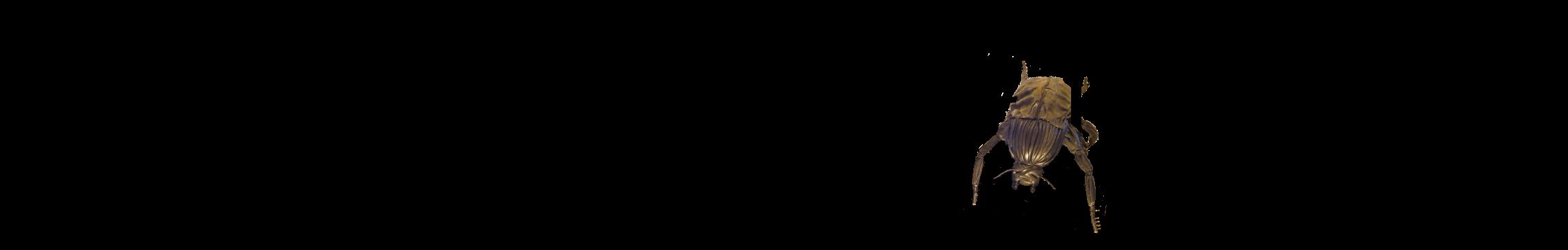 Scaraboeus Caput Hominis